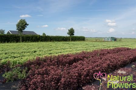(2013-07-29) Fotoshoot Bloemen 032